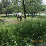 ZOOpark_chomutov_056